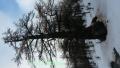 Vallon de la Braisse, Tinée, Terre s d'émotions, Randonnées dans le 06. Raquettes à neige
