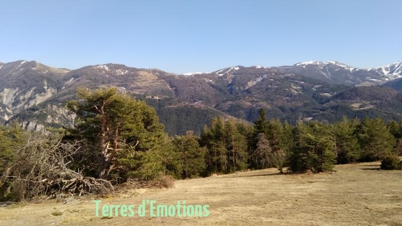 Péone, aliège, Col de Crous, Tête de Méric, Azur Mercantour Nature, Randonnée dans le 06, Vallée Haut Var,  Tuébi