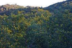 Tanneron, Mimosas, Terres d'émotions, Randonnée dans le 06